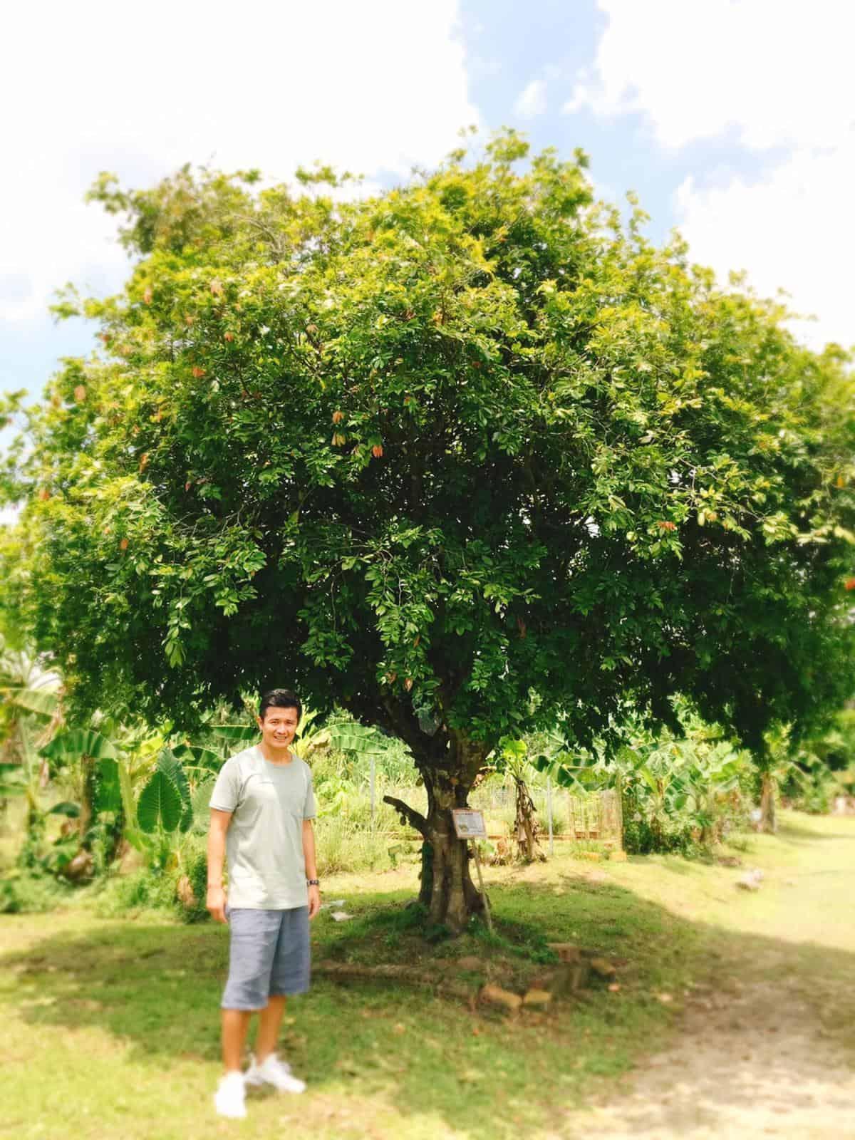 NamNam Fruit 3