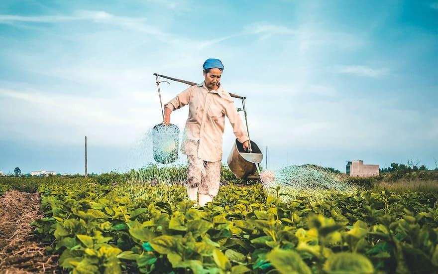 Mekong Delta Agriculture 2