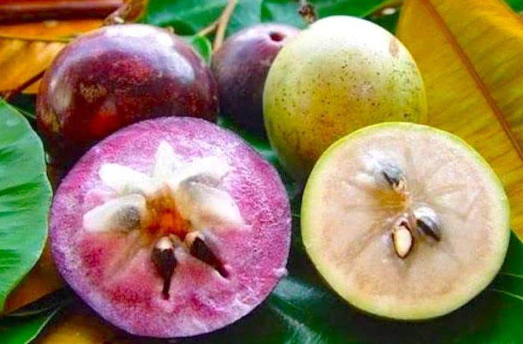 Vietnamese Star Apple or Vú Sữa